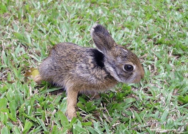 Image Result For Deter Rabbits From Garden